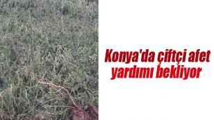 Konya'da çiftçi afet yardımı bekliyor