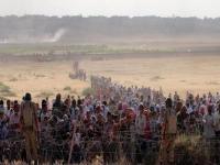 '1 Kasım Dünya Kobani günü'