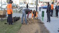 Cihanbeyli'de Bahar Hazırlıkları Erken Başladı