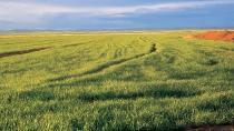 Cihanbeyli ve Kulu ovaları koruma altına alındı